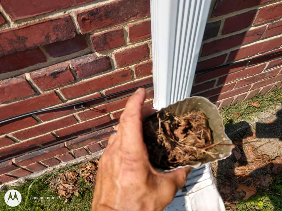 Downspouts Clogged